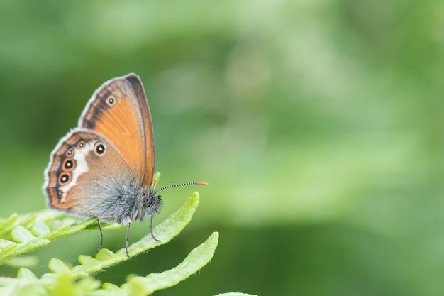 Красивая точечная сине-оранжево-белая бабочка на зеленом листе папоротника