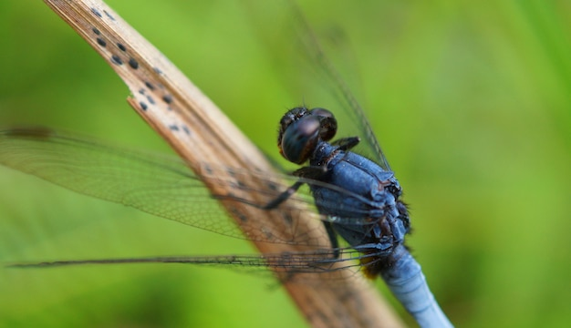 Красивая стрекоза сидит на листе дерева, изображение выборочного фокуса.