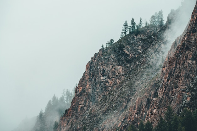 Красивый драматический вид на скалистую гору с хвойными деревьями в густом тумане