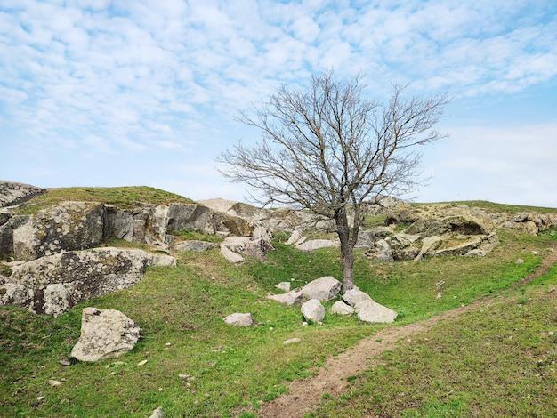 春の緑の草、石と青い曇り空の表面に美しい乾燥した木