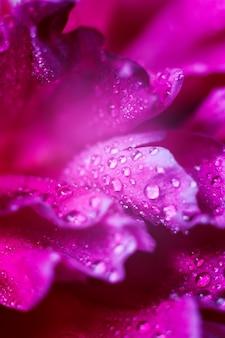 牡丹の花びらのクローズアップの美しい水滴ソフトフォーカス花のマクロ背景