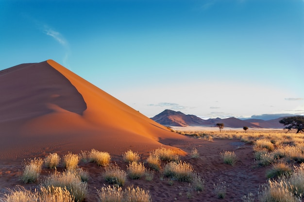 Beautiful dunes and nature of namib desert, sossusvlei, namibia, south africa