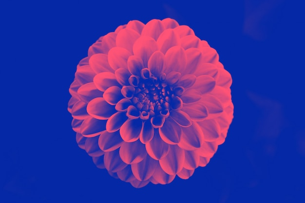 Beautiful duotone flower.