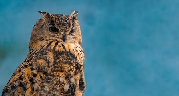 The beautiful eagle owl