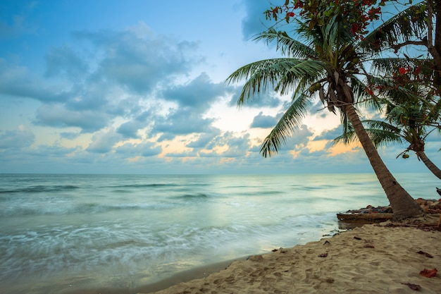 Beautiful early morning sunrise over coconut tree