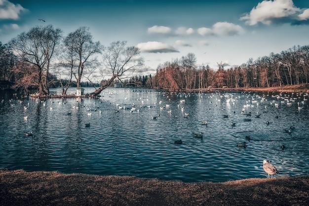 공원에서 호수에 조류와 함께 아름 다운 이른 봄 풍경.