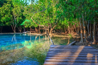 Beautiful Emerald pool in deep Forest at Krabi THAILAND