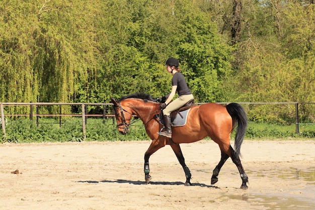 Beautiful equestrienne on brown horse in summer