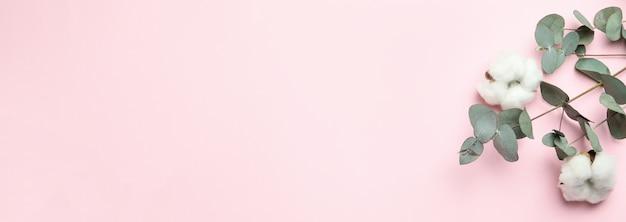 분홍색 배경에 아름다운 유칼립투스와 목화