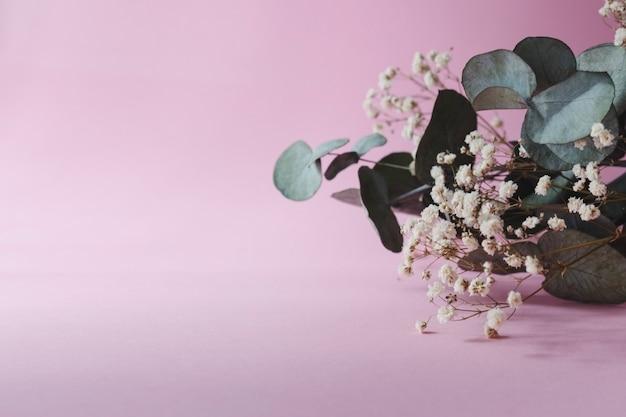ピンクの背景に美しいユーカリとカスミソウ