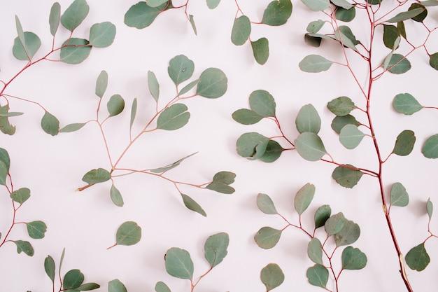 Красивый узор ветвей эвкалипта на бледно-пастельно-розовом