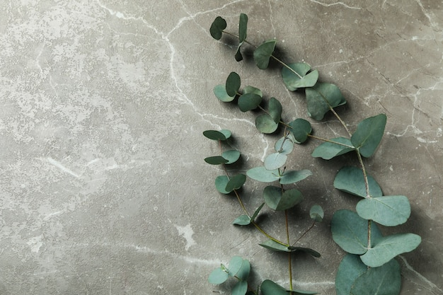 Beautiful eucalyptus plant branches on gray textured background