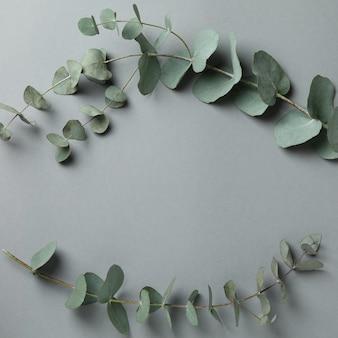 Beautiful eucalyptus plant twigs on gray background