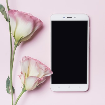 Beautiful eustoma flower and smartphone against pink background