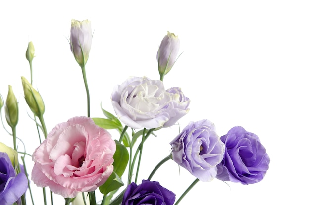 Beautiful eustoma flowers with leafs and buds on white