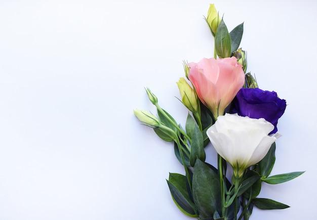 緑の葉で満開の美しいトルコギキョウ(lisianthus)花コピースペースと白い背景の花