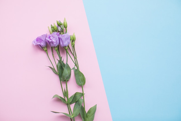 Красивая эустома на разноцветных бумажных фонах с копией пространства. весна, лето, цветы, цветовая концепция, женский день.