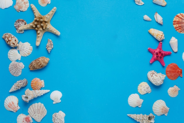 Beautiful exotic conch collection beach background