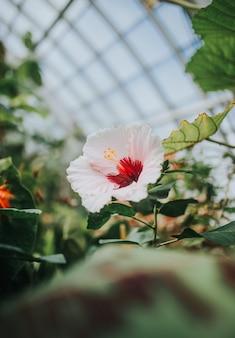 Красивый экзотический цветок в окружении зелени в ботаническом саду