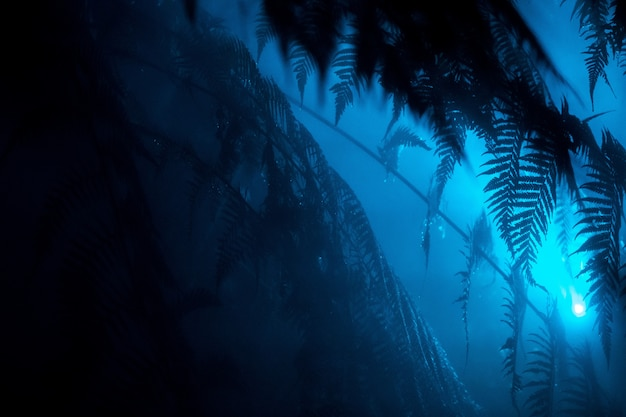 Beautiful exotic leaves in a tropical forest with a blue light shining near