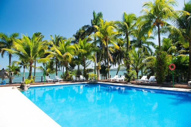 青い空の背景に屋外のビーチチェア晴れた夏の水プールの近くの美しいエキゾチックなヤシの木の緑の色
