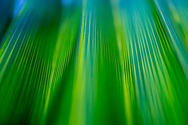 緑の熱帯ヤシの葉の美しいエキゾチックなパターン