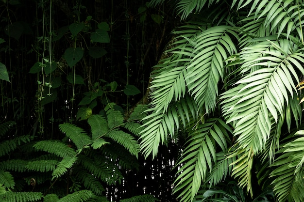 Beautiful exotic plants and leaves
