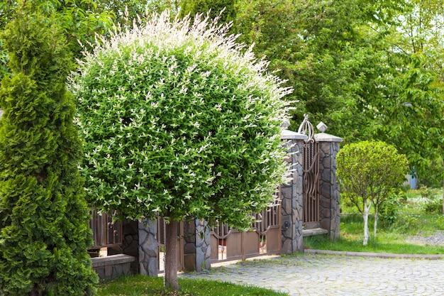 럭셔리 하우스, 집의 아름다운 외관. 푸른 잔디, 울타리와 민들레 같은 나무 마당.