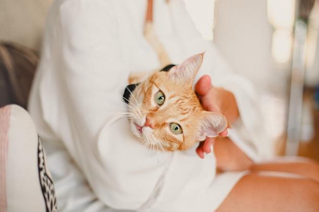 Красивое лицо оранжевой кошки в объятиях ее владельца
