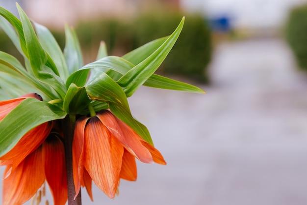 Красивая фея мечтательная магия красный желтый оранжевый цветок лантана