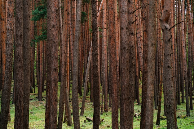 Красивые сказочные лесные деревья