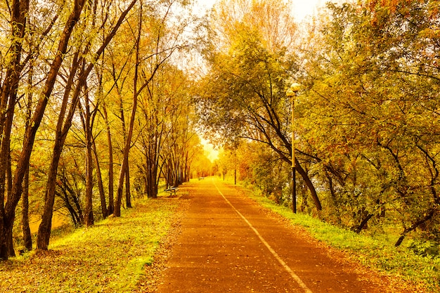 Beautiful fall landscape with narrow alley road
