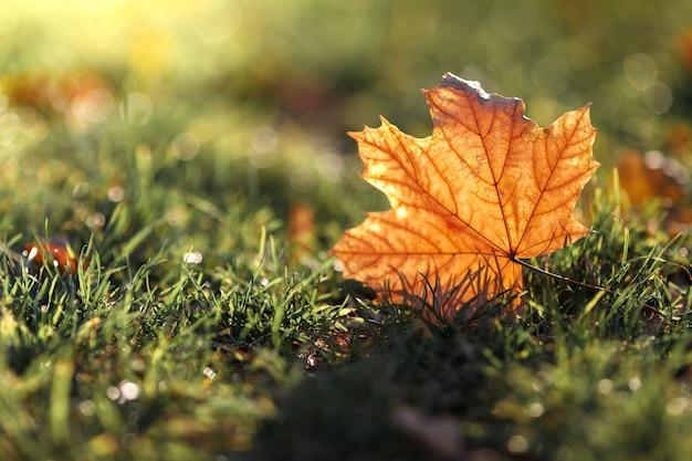 Красивый опавший осенний желтый лист на фоне солнца