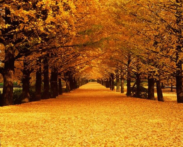 Beautiful fallen leaves in autumn