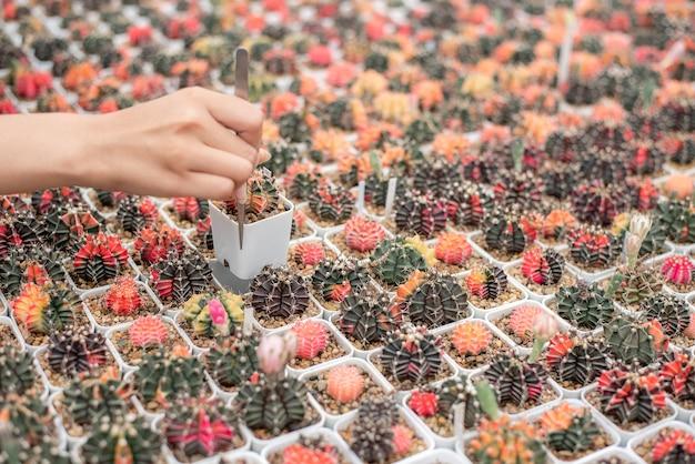 Красивый фермер, проверяющий качество кактусов с таблеткой на горшке в доме кактусовой фермы.