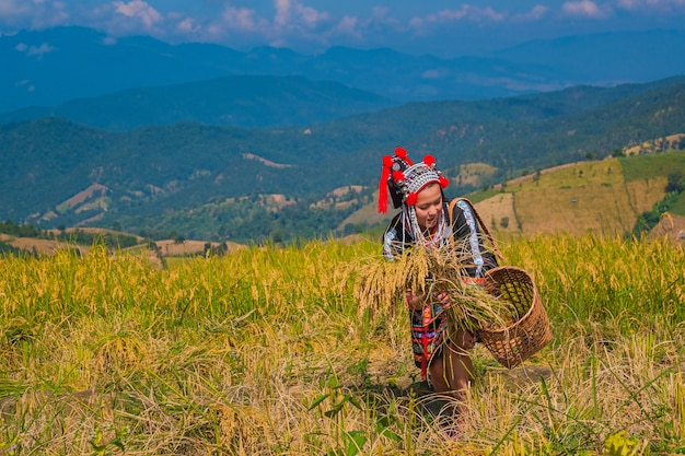 Beautiful farmer girl with straw in rice fields in northern thailand