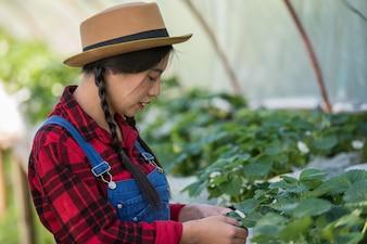 Красивая женщина фермер, проверка клубничная ферма