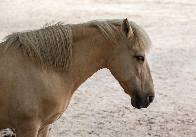 Beautiful female horse