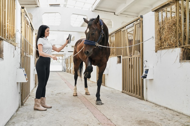Beautiful female rider grooming horse with cleaning tools