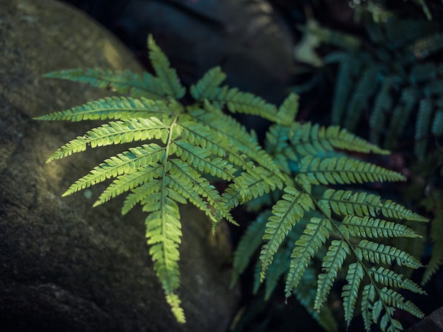 아름 다운 고 사리 햇빛에 녹색 잎