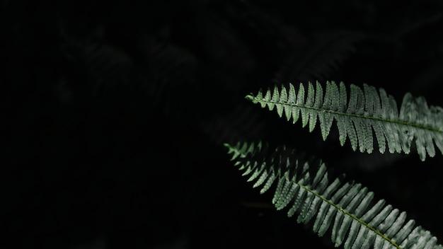 검은 배경에 아름 다운 고 사리 잎