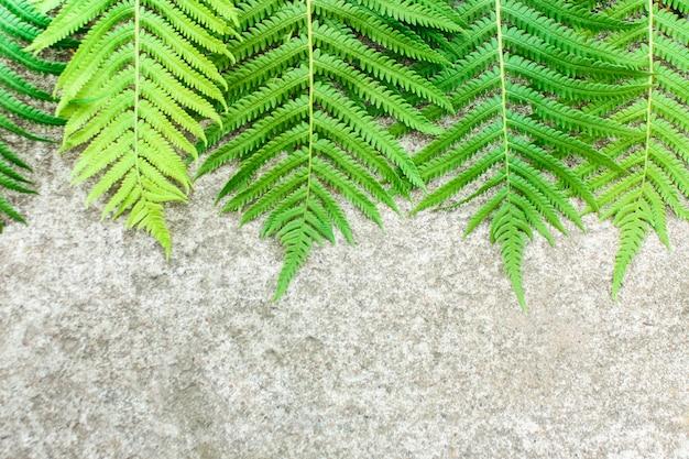 아름 다운 고 사리 잎 녹색 단풍. 햇빛에 자연 꽃 화분 배경입니다.