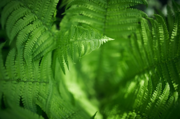 Beautiful ferns leaves green foliage natural floral fern
