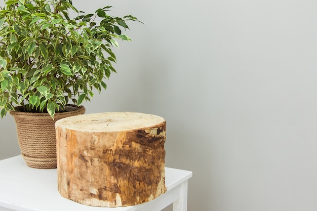 나무 받침대 연단이있는 흰색 테이블에 황마 냄비에 아름다운 무화과 나무속