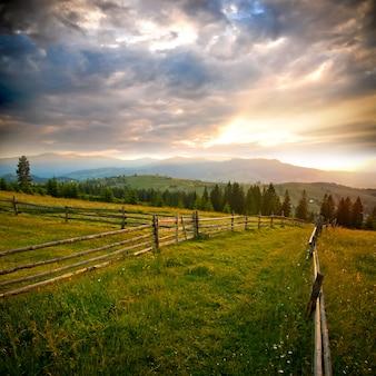 Beautiful field in carpathians