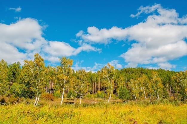 놀라운 구름과 녹색 숲, 푸른 하늘의 배경에 아름 다운 필드입니다. 가을 풍경.