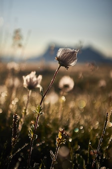 Beautiful of a field with dry flowers