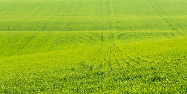 화창한 날 경작된 초원의 목가적인 전망에 푸른 잔디가 있는 아름다운 들판