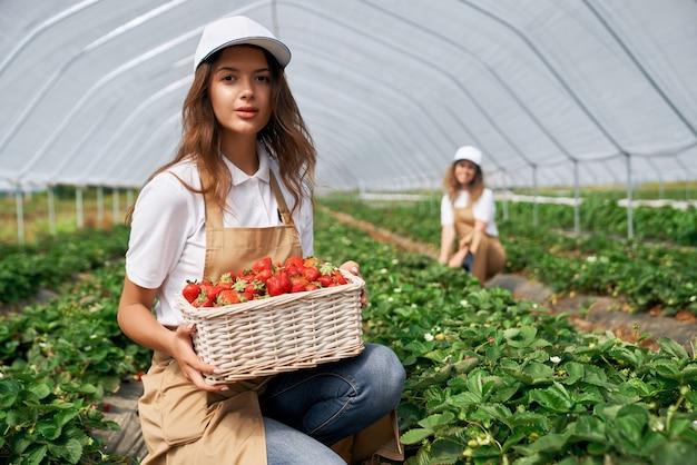 딸기 바구니와 함께 아름다운 현장 근로자
