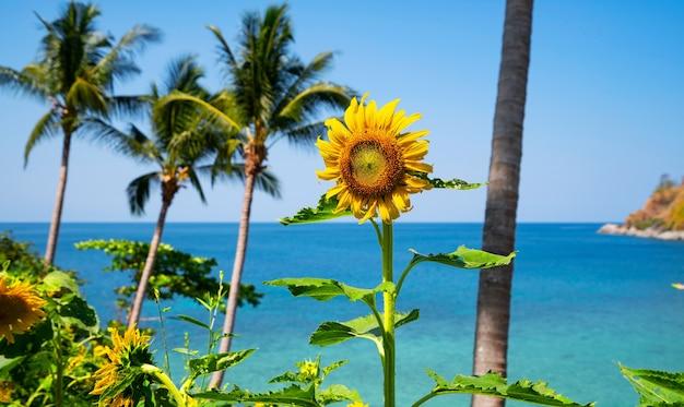 해변과 여름에는 해바라기와 함께 아름 다운 필드 아름 다운 바다 청록색 물 표면 및 태국 푸 켓에서 여름 풍경에 코코넛 야자수.